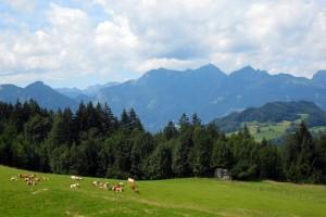 Almwiesen im Hochriesgebiet