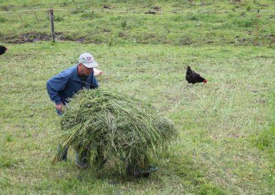 Landwirtschaft auf dem Rieplhof