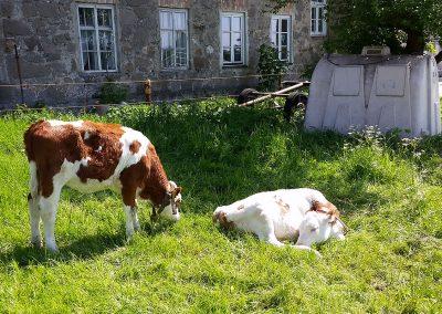 Tiere auf dem Rieplhof